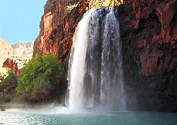 animal in havasu falls