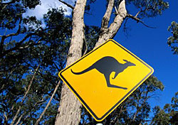Kangaroo Crossing, Australia (Photo: Glen Allison)
