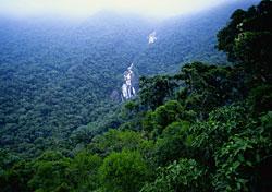The Amazon jungle of Brazil (Photo: Adalberto Rios Lanz/Sexto Sol)
