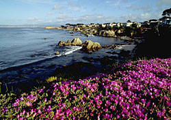 Monterey, California (Photo: Robert Holmes/CalTour)