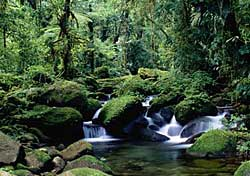 Rain forest (Photo: Costa Rica Tourist Board)