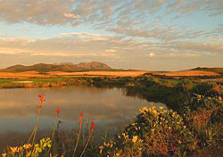 South Africa's coastal landscape (Photo: Keith Levit/Index Open)