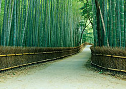 Bamboo path, Japan (Photo: Akira Kaede)