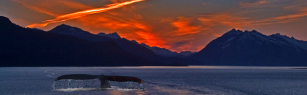Alaska- Whale Tail at Sunset (Photo: iStockPhoto/Paul Wolf)