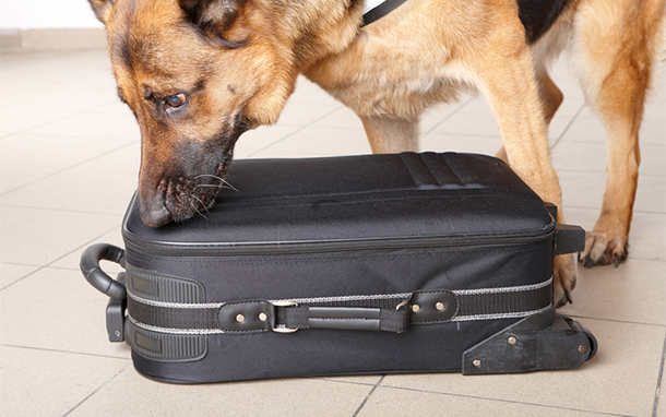 Drug-Sniffing Dog at Airport (Photo: Shutterstock.com)