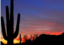 Arizona-Cactus in the Sunset (Photo: iStockPhoto/Anton Foltin)