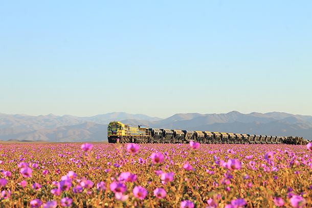 Why Are Flowers Blooming in the Driest Desert on Earth?