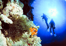 Diving in the Great Barrier Reef (Photo: Cairns Dive Centre)