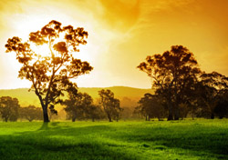 Australia: Sunset over Field with Trees (Photo: Thinkstock/iStockphoto)