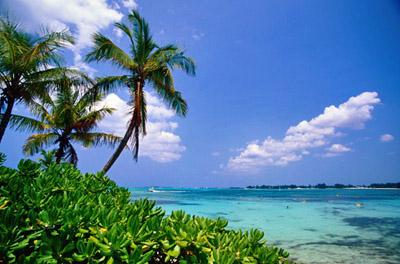 Bahamas Palm Trees/Ocean