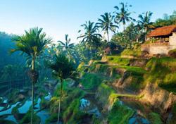 Bali - Terrace Rice Fields (Photo: iStockphoto/SZE FEI WONG)