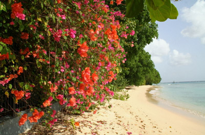 Barbados Beach with Flowers