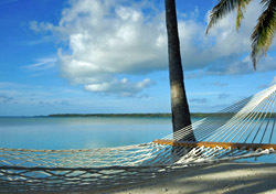 Beach: Hammock Palm Tree (Photo: Thinkstock/iStockphoto)