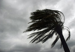 Beach: Wind-Swept Palm Tree - Black and White (Photo: Thinkstock/iStockphoto)