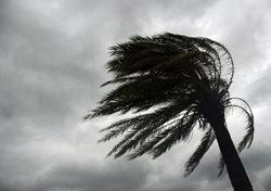 Beach: Wind-Swept Palm Tree - Black and White (Photo: Thinkstock/iStockphoto)