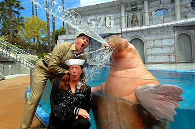 Walrus performance at SeaWorld San Diego (Photo: Seaworld)