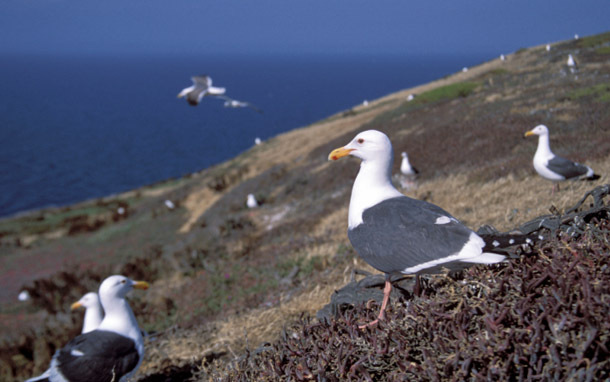 California: Channel Islands (Photo: Thinkstock/iStockphoto)
