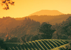 The Napa Valley's wineries, rolling countryside, and gourmet fine dining scene create the ideal recipe for romance. Read SmarterTravel.com's <a href=
