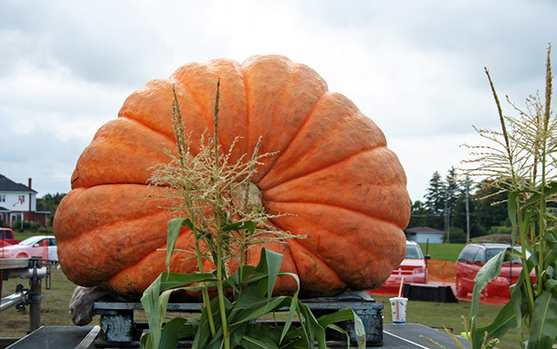 cover_biggest_pumpkins-dd.jpg