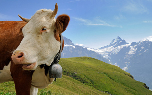 Cow at Mountain Range (Photo: Thinkstock/iStockphoto)