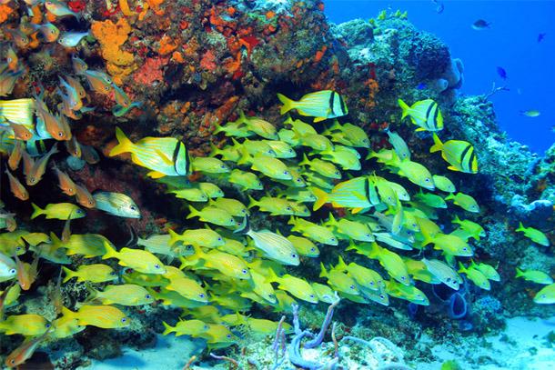 Cozumel Snorkeling