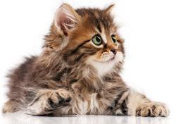 Cute Kitten (Photo: Thinkstock/iStockphoto)