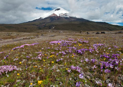 Ecuador - Cotopaxi Volcano (Photo: Thinkstock/iStockphoto)