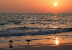 Sea birds on Anna Maria Island, Florida (Photo: iStockPhoto.com/Jim Harrington)