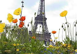 "With blooming flowers, pleasant weather, and fewer visitors, spring is a lovely time to visit the ""City of Light."" You can explore the city like a local, and since it's not yet high season, you can also experience it on a budget.   The first step to visiting Paris this spring is booking a plane ticket, and here are a few simple tips on how to do exactly that. (Photo: Paris Tourist Office/Amelie Dupont)"