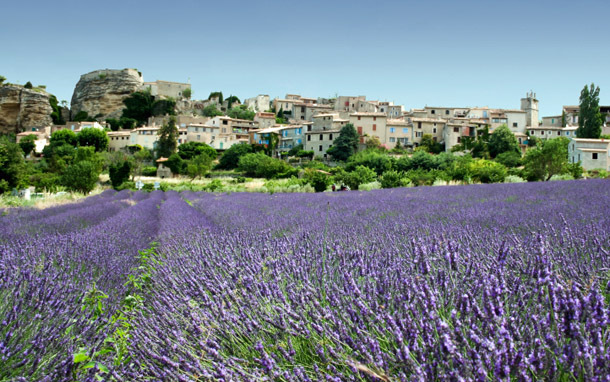 France: Provence, Lavender Fields (Photo: Thinkstock/iStockphoto)