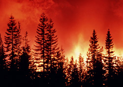 Wildfire (Photo: IndexOpen)