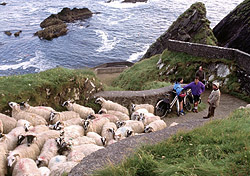 "County Kerry, on Ireland's southwestern coast, features the famous Ring of Kerry, one of the country's most panoramic drives along the Iveragh Peninsula. You'll also find the beautiful <a href=""http://homepage.tinet.ie/~knp/""target=""_blank"">Killarney National Park</a> in this region. (Photo: Fáilte Ireland)"