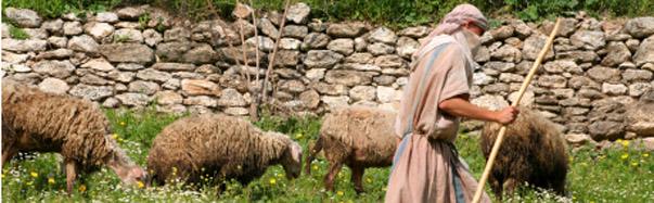 Israel-Shephard With Flock (Photo: iStockPhoto/Noel Powell)