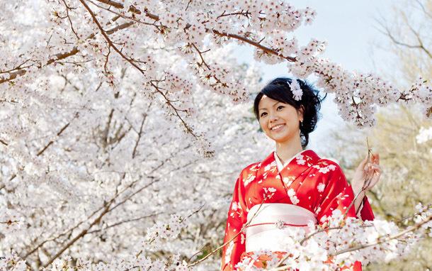 Japan: Geisha Amidst Cherry Blossoms (Photo: Shutterstock/takayuki)
