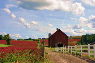 Oregon: Wilamette Valley road