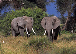 "<p>A Kenyan safari should appeal to any earth-conscious traveler. With more than 50 parks to choose from, it's easy to see elephants, wildebeest, lions, and other wildlife close up. <a href=""http://www.friendlyplanet.com/kenya-tanzania-wildlife-safari.html""target=""_blank"">Friendly Planet</a> offers a nine-night trip, including airfare, many meals, in-country transportation, and sightseeing excursions from $2,799.</p>   (Photo: Index Open)"