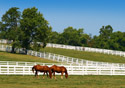 Kentucky-Lexington Horses in a Field