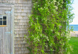 Cottage RentalIf your idea of a vacation consists of staying in a private cottage on an island, then look no further than Nantucket. This New England island offers the best of both worlds with its quaint downtown area filled with shops and fine dining, and miles of white, sandy beaches. Cottages typically rent by the week, and can start at about $750. This can be the perfect getaway for those who want to escape from it all, and be completely self-sufficient.  (Photo: iStockphoto)