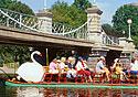 Swan Boats in Boston's Public Garden