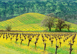 Napa Valley in Winter (Photo: Thinkstock/Medioimages/Photodisc)
