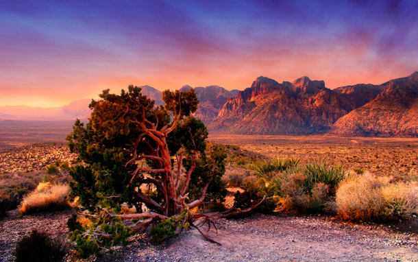 Nevada: Red Rock Canyon (Photo: Thinkstock/iStockphoto)