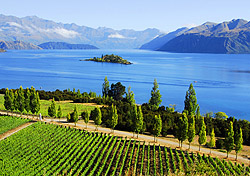 Rippon Winery, Wanaka, New Zealand (Photo: Molly Feltner)