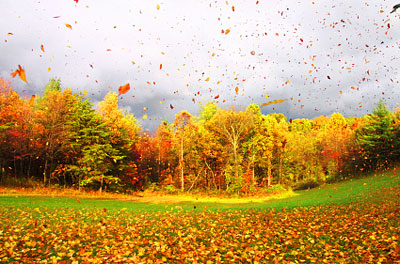 Fall on Fall Leaves In The Wind  Ohio