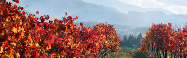 Oregon - November day in an Oregon vineyard (Photo Credit: iStockPhoto, Rachell Coe)