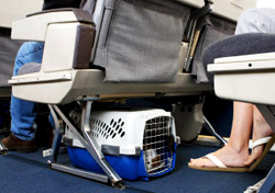 Pet Travel - Pet Carrier Under Airplane Seat (Photo: iStockphoto/Gene Chutka)