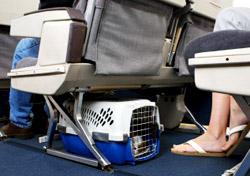 Pet Travel - Pet Carrier Under Airplane Seat (Photo: iStockphoto/Gene Chutka)