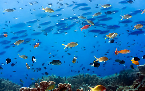 Caribbean: School of Fish (Photo: Thinkstock/Hemera)
