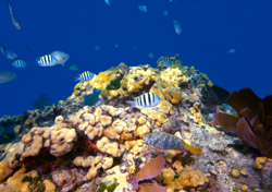 Florida Keys: Sombrero Reef Underwater (Photo: iStockphoto/Christian Wheatley)