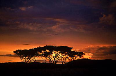 Sunset at Serengeti National Park