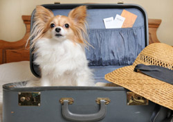 Dog in a Suitcase with Hat (Photo: iStockphoto/MoniqueRodriguez)